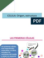 celula procariota