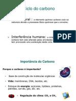 Ciclo Do Carbono Leandro