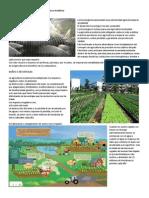 Desventajas y Beneficios de La Agricultura Moderna 1.1