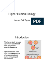 Human Cell Types PowerPoint (H) Tcm4-664862