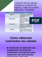¿Cómo Obtienen Nutrientes Las Células Egestión y Digestión en Ppt