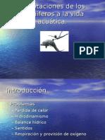 Adaptaciones de los Mamíferos a la vida acuática
