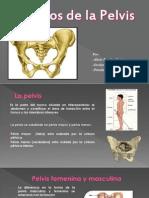 Huesos de La Pelvis