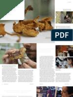 RBG Kew Fungus collection