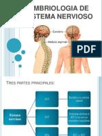 Embriologíadel Sistema Nervioso.pptx