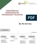 3CARACTERISTICAS MORFOLOGICAS DE PROTOZOARIOS Y HELMINTOS.pptx