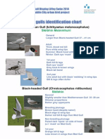 Gull Poster p 1