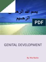 Embryology Genital