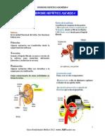Sd Nefrítico Rm Plus Medic A