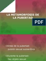 La Metamorfosis de La Pubertad (Expo 1)