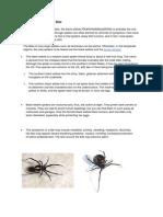 Black Widow Spider Bite