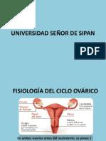 CICLO OVARICO.docx