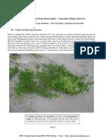 Eduart Zimer - (SDU) - Adventive Plants - Part 5 (2008)