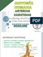 ARTERIAS CARÓTIDAS.pdf