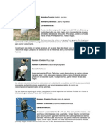 Aves en Peligro Extincion Guatemala