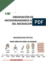 2.- Observación de Microorganismos a Través Del Microscopio