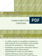 0 2009 histologia vegetal_______1 (2)