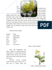Deskripsi Tanaman Caesalpinaceae 2003