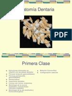 Anatomía Dentaria