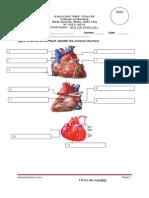 Long Exam EKG Holter Stress