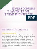 Enfermedades Del Sistema Reproductor