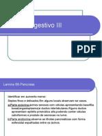 Sistema Digestivo III