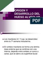 Origen y Desarrollo Del Hueso Alveolar