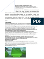Chlorella sp.docx
