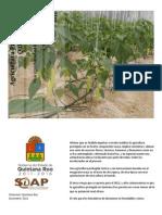 Estatus y Futuro de La Agricultura Protegida en Quintana Roo