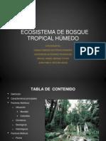 Ecosistema Tropical Final2