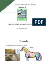 004-2011 AV2-Osteol,artro,Cab-Cue-Tronco-EQU