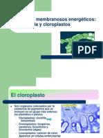 Cloroplasto Beg 121210132552 Phpapp01
