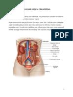 76789506 Anatomi Sistem Urogenital