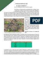 Fertilizacion fosforada en maiz.pdf
