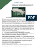 Circovirus Porcino