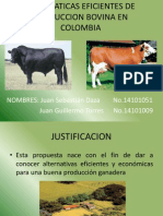Alternaticas Eficientes de Produccion Bovina en Colombia