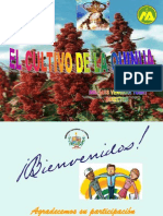 Cultivo de La Quinua Exposiion