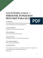 Stuktur, Fungsi Penyakit Kulit