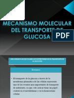 Mecanismo Molecular Del Transporte de Glucosa