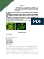 exposicion microalgas