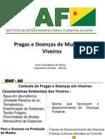 Controle de pragas e doenças em Viveiros