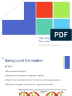 dna chromosomes and chromatin