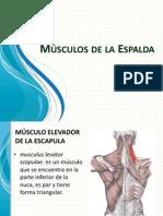 Músculos de la Espalda.pptx