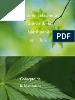 (121783800) 100473290-Marihuana