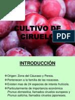 PresentaciónCIRUELA