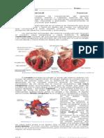 Cardiovascular 2 Sem 2014-1