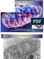 mitocondriayrespiracincelular-100428173412-phpapp02