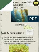 BATI Rumput Laut