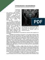Scientific American Cientistas Testemunham a Neurogênese