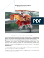 Reproduccion de Betta Manual 1 (1)